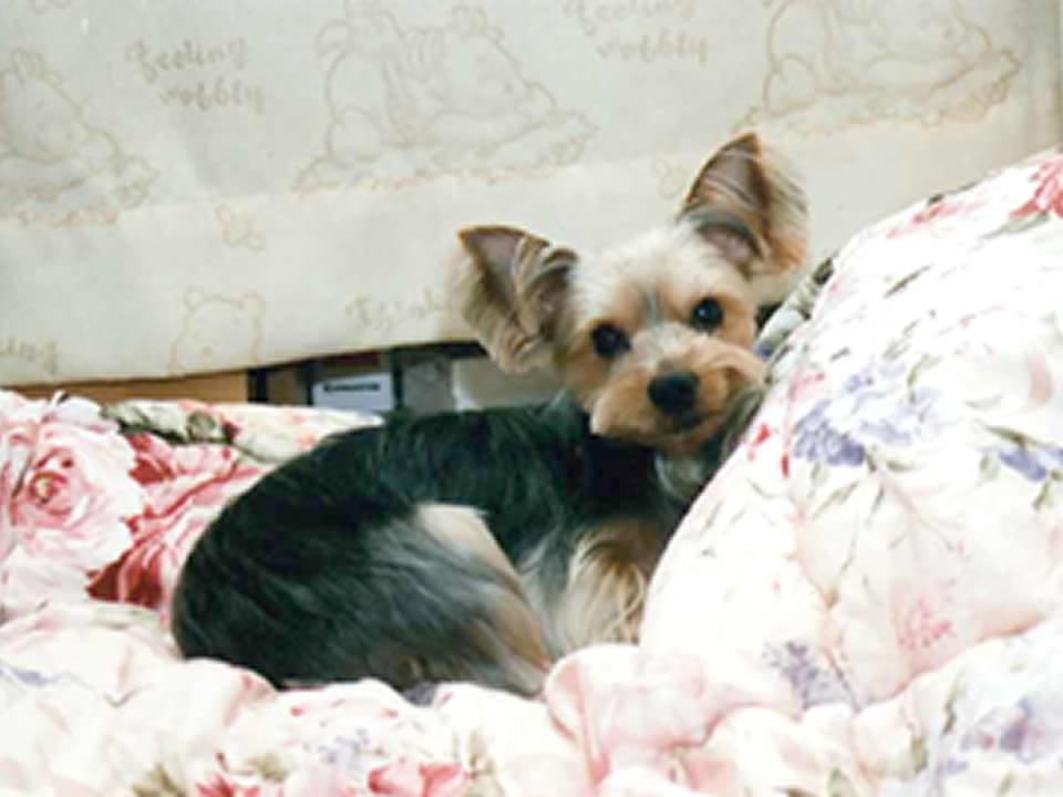 ラッキー君2歳9ヶ月