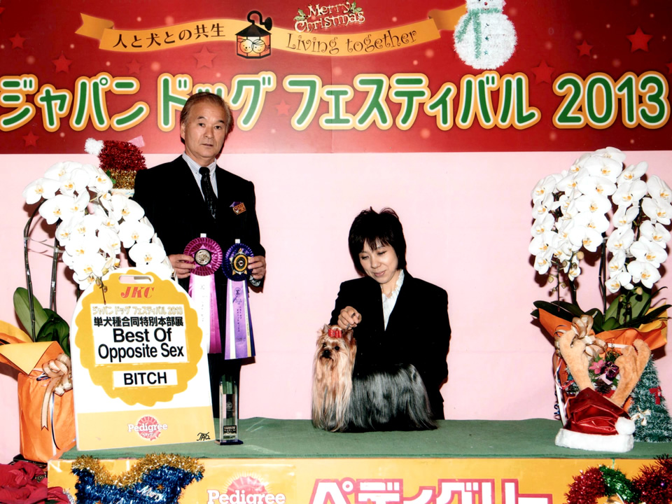 mydog_Henri_awards06